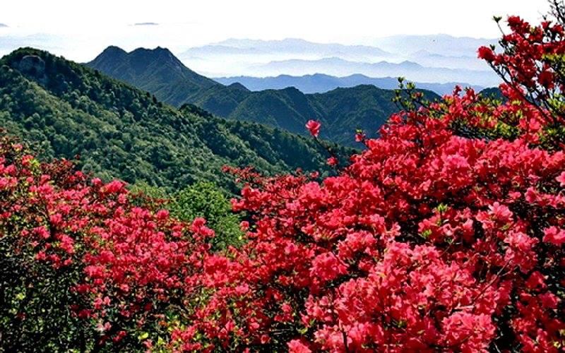 Sapa tháng 4 đậm sắc hoa rừng khiến lòng người ngây ngất