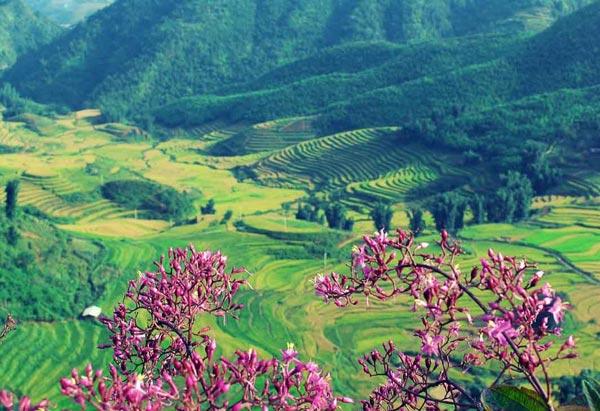 Thung lũng Mường Hoa - bãi đá cổ
